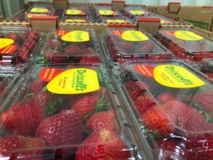Cartons of Driscoll's strawberries at the San Benito County food bank